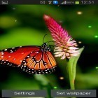 Download live wallpaper Best butterfly for free and Dubai HD by Forever WallPapers for Android phones and tablets .