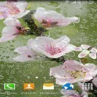 Download live wallpaper Blooming trees for free and Home tree for Android phones and tablets .