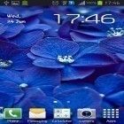 Download live wallpaper Blue flowers for free and Nature by Creative Factory Wallpapers for Android phones and tablets .