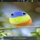 Download live wallpaper Cute bird for free and Cute by EvlcmApp for Android phones and tablets .