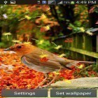 Download live wallpaper Cute birds for free and Cute cat by Live Wallpapers 3D for Android phones and tablets .