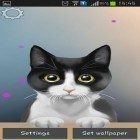 Download live wallpaper Cute kitty for free and Sunny forest for Android phones and tablets .