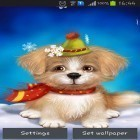 Download live wallpaper Cute puppy for free and Bamboo house 3D for Android phones and tablets .