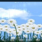 Download live wallpaper Daisies for free and Snow winter for Android phones and tablets .