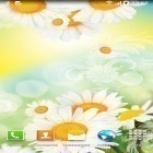 Download live wallpaper Daisies by Live wallpapers for free and Cars clock for Android phones and tablets .
