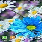 Download live wallpaper Daisies by Live wallpapers 3D for free and Fairy house for Android phones and tablets .