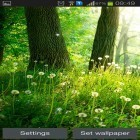Download live wallpaper Forest by Live wallpaper hq for free and Plasma orb for Android phones and tablets .