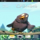 Download live wallpaper Funny bird for free and Cute by EvlcmApp for Android phones and tablets .
