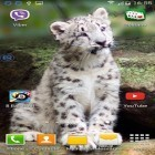 Download live wallpaper Leopards: shake and change for free and Digital clock for Android phones and tablets .
