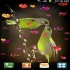 Download live wallpaper Love: Birds for free and Cute cat by Live Wallpapers 3D for Android phones and tablets .