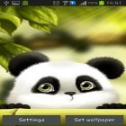 Download live wallpaper Panda for free and God of war for Android phones and tablets .