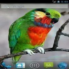 Download live wallpaper Parrot by Wpstar for free and Plasma orb for Android phones and tablets .