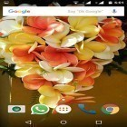 Download live wallpaper Plumeria for free and Fire tornado for Android phones and tablets .