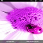 Download live wallpaper Pretty pink for free and Purple hearts for Android phones and tablets .