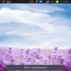 Download live wallpaper Purple lavender for free and Luxury by HQ Awesome Live Wallpaper for Android phones and tablets .