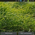 Download live wallpaper Real grass for free and Metaballs liquid HD for Android phones and tablets .