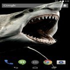 Download live wallpaper Shark 3D for free and Scottish fold cat for Android phones and tablets .