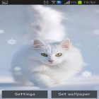 Download live wallpaper Snow cats for free and Cute by EvlcmApp for Android phones and tablets .