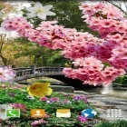 Download live wallpaper Spring garden for free and Sakura pro for Android phones and tablets .