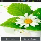 Download live wallpaper Summer camomile for free and Fairy house for Android phones and tablets .