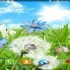 Download live wallpaper Summer flowers for free and Deep space 3D for Android phones and tablets .